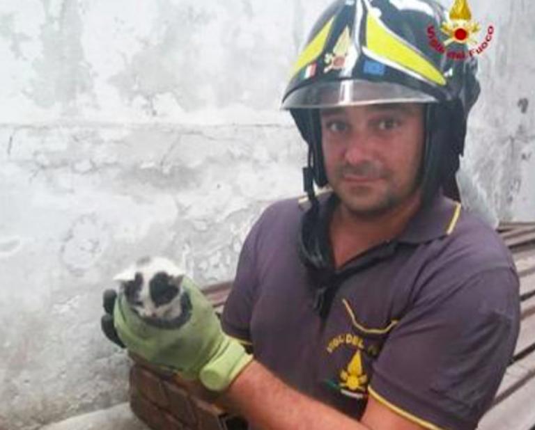 Un vigile del fuoco con il gattino trovato sotto il ponte Morandi