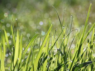 prato erba