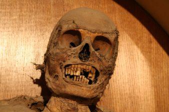 Urbania mummie 3 338x225