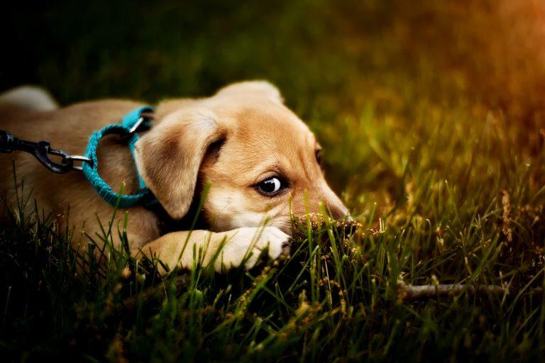 Uccide un cane a calci: su Facebook appello per trovarlo
