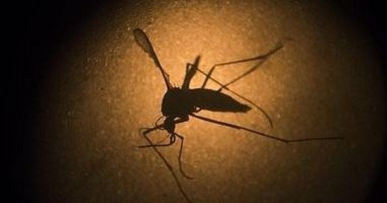 """Ricerca: """"Niente più malaria, si cambia Dna alle zanzare"""""""
