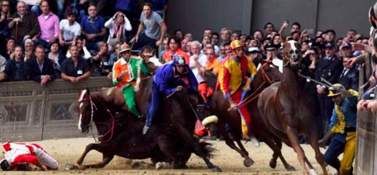 Palio di Siena, abbattuto il cavallo Raol