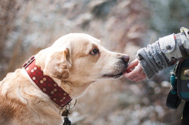 Fino a 300 euro all'anno a chi adotta un cane randagio