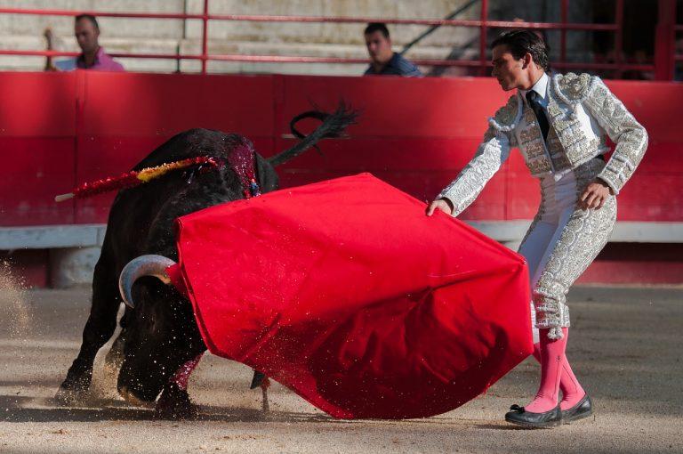 toro zampe spezzate denuncia pacma corrida