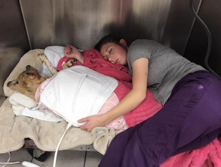 Veterinaria si addormenta vicino al cane che accudisce