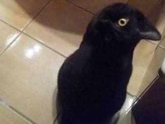 Sembra un uccello, ma è tutta un'illusione ottica