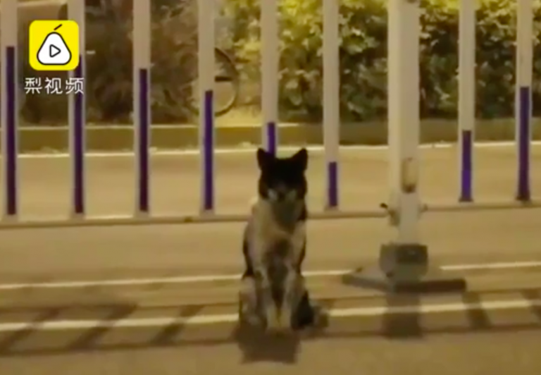 cane aspetta padrona cina