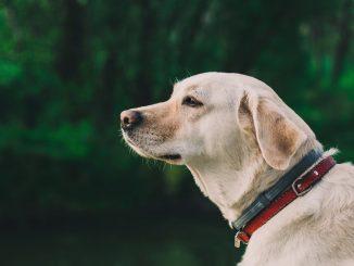 collari per cani