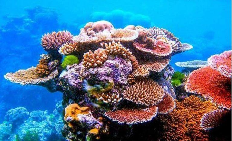 creme solari minaccia barriera corallina