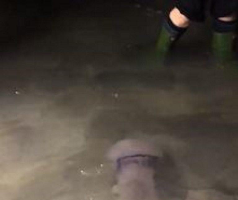 Meduse nuotano in giro per Venezia vicino ai turisti