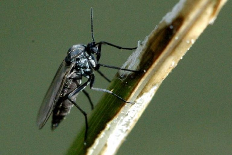come eliminare moscerini dalle piante