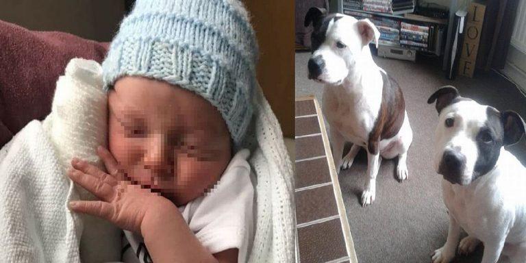 UK, morto bimbo di un mese: sbranato in casa dai cani