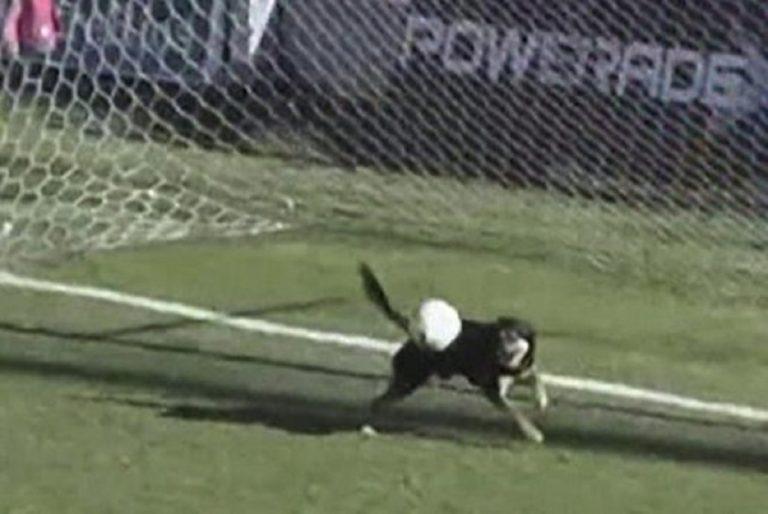 Argentina, cane aiuta il portiere: salva un gol sulla linea