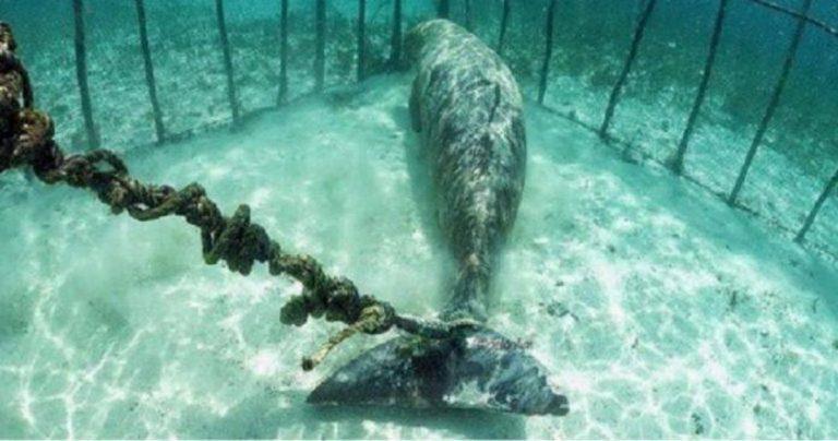 Russia, drone scopre prigione di balene