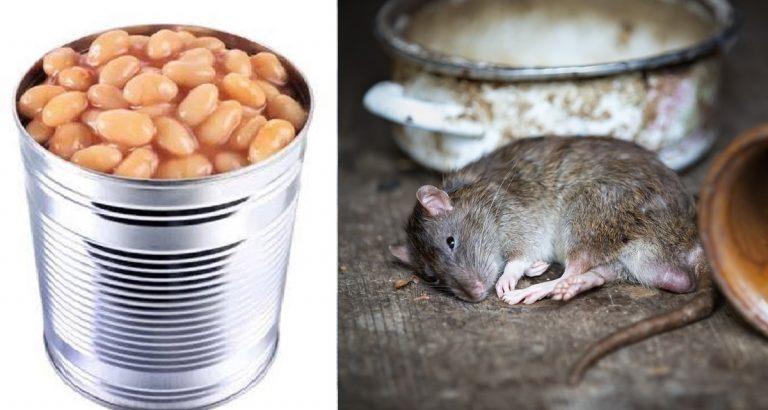 Trovato topo morto in una scatola di fagioli italiani