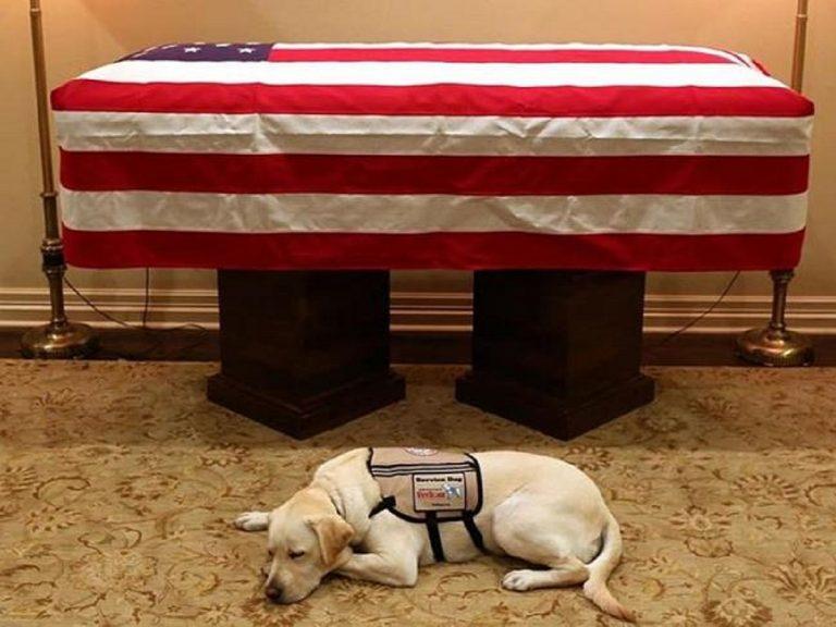 Il toccante saluto del cane di George Bush al suo padrone