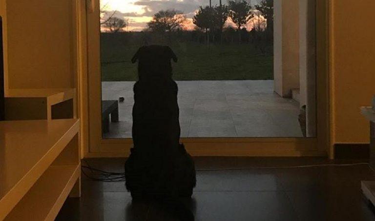 Emiliano Sala, la foto del cane
