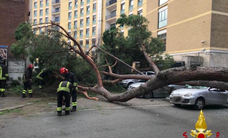 Roma, albero caduto per maltempo, due feriti