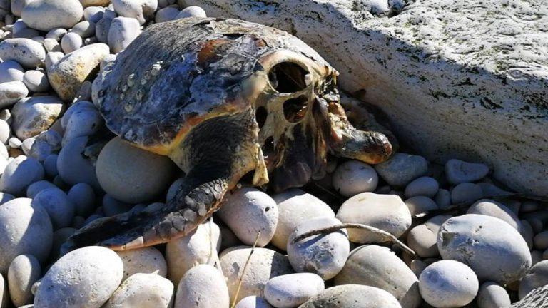 tartarughe marine decapitate 768x432