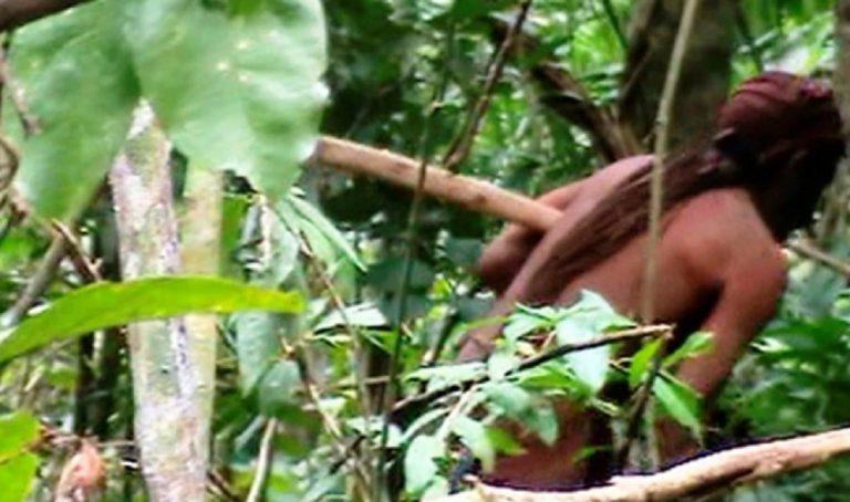brasile solo foresta 768x454