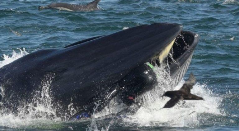 sub balena