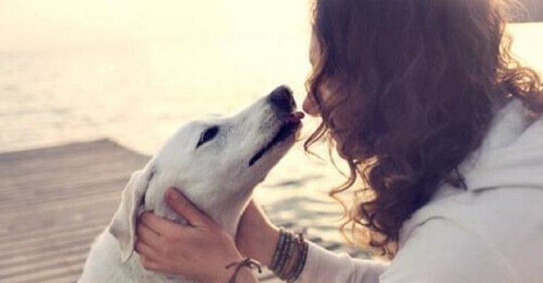 rapporti con cane