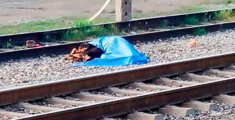 Messico, cane veglia padrone investito da un treno
