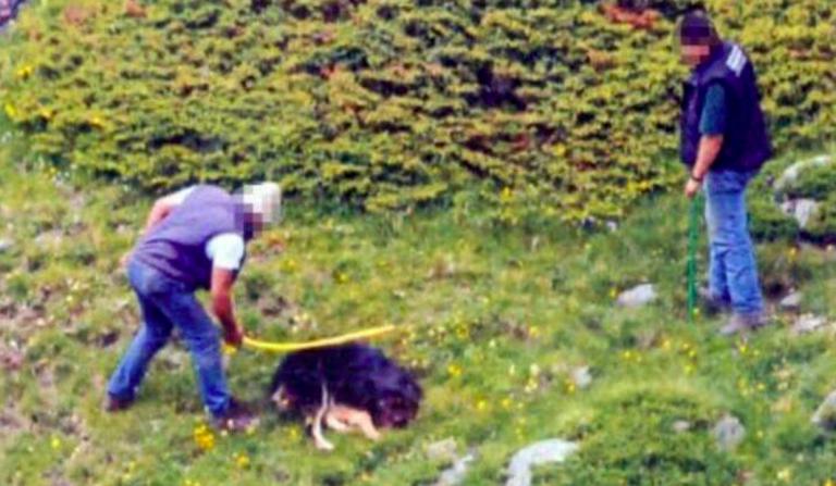 Cane ucciso a bastonate, assolti
