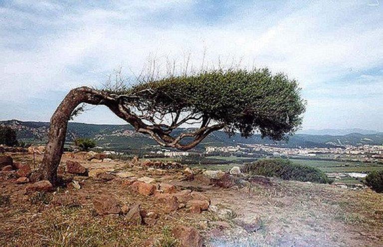 albero piegato