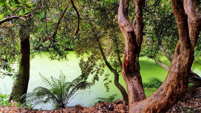 cornovaglia giardini perduti heligan