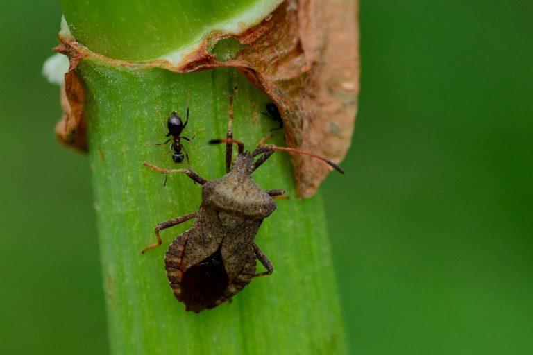 repellente formiche