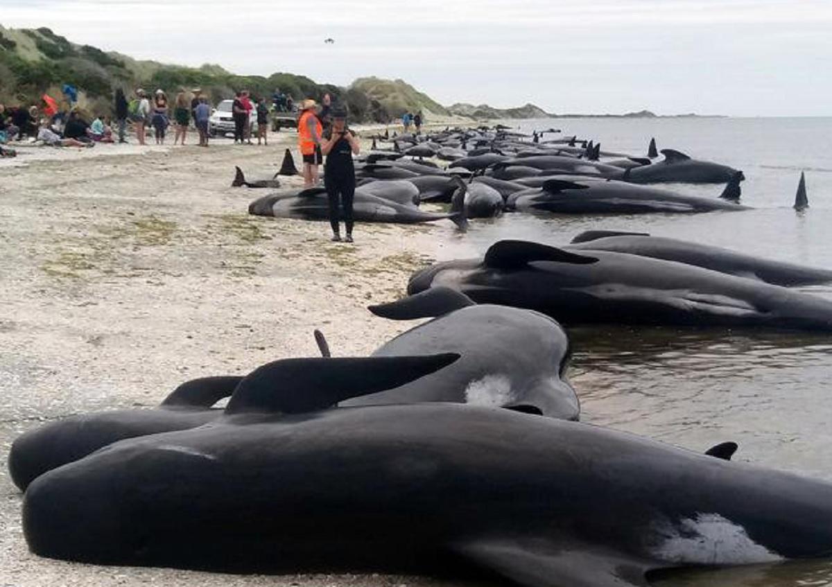 balene morte spiaggia