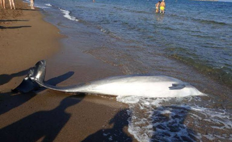 delfini spiaggiati