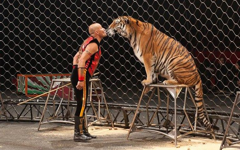 domatore-tigre
