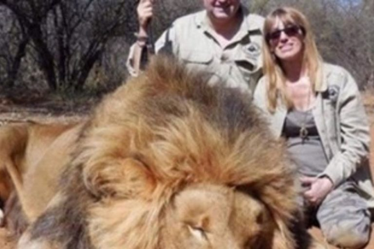 leone ucciso