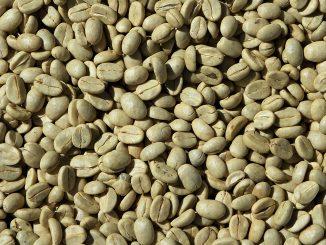 Caffè verde per dimagrire: benefici e il miglior integratore