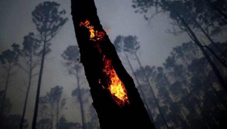 incendi amazzonia 768x438