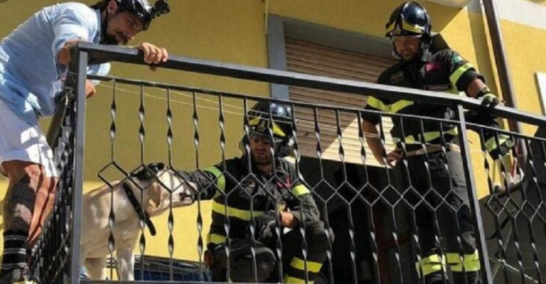 Vittorio Brumotti salva un cane