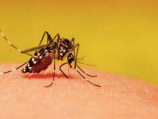 zanzara 1