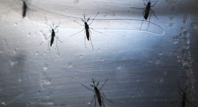 persone morte malattia zanzare
