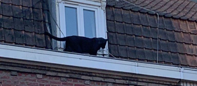 In Francia, una pantera, è entrata in un appartamento
