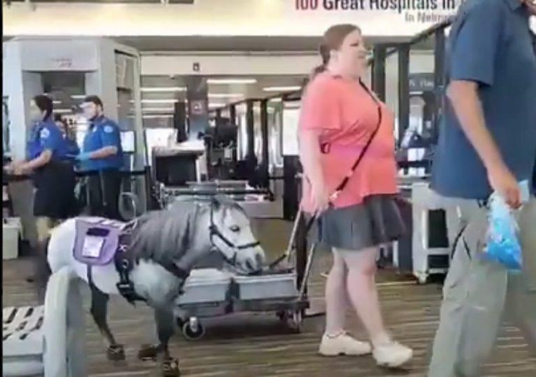 viaggio aereo con cavallo