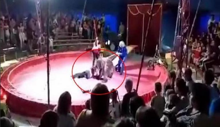 orso attacca domatore