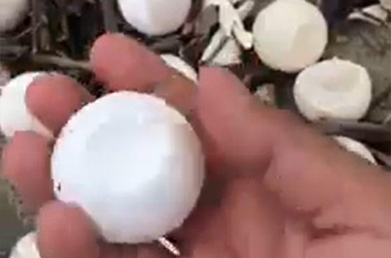 tempesta-messico-tartarughe