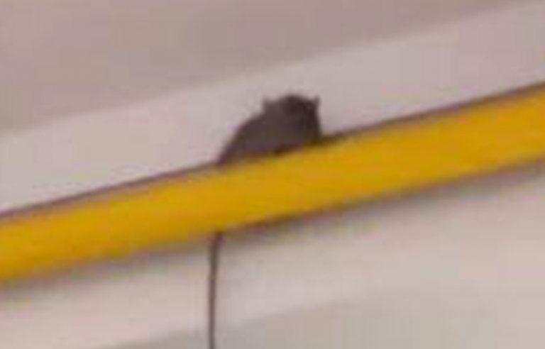 Filmano topo nella cucina della scuola, studenti a rischio sospensione