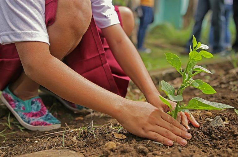 alberi piantati a milano