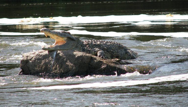 Bimba azzannata da coccodrillo