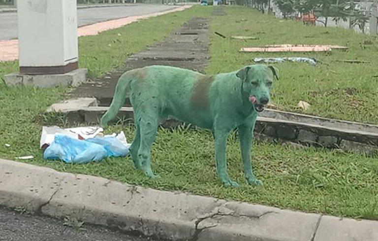 cane-dipinto-verde-malesia