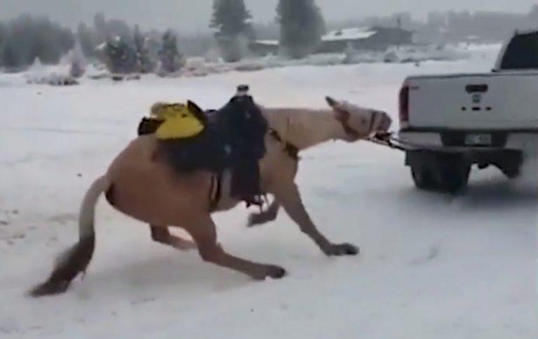 cavallo-fuoristrada-usa