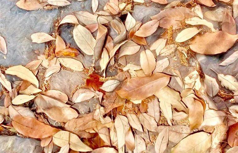 giovane-rapporti-foglie